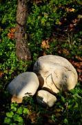 Die Steine der Magredi